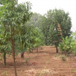 45. agro forestry