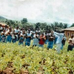 cameroon.shumas.school.environmental.education.programme. Environmental education in school garden