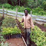 CAMEROON - TREE NURSERY IN KUMBO