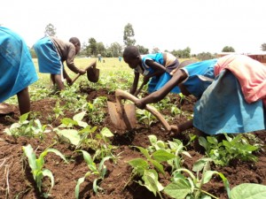 cameroon.camgew.school.environmental.education.programme. School children weeding
