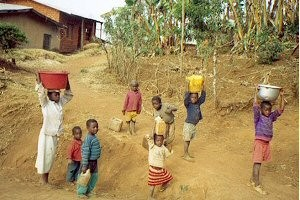 cameroon.shumas.eucalyptus.replacement.project. Children carrying buckets of water