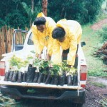 cam-transporting-seedlings-640