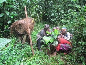 cameroon.camgew. Reforestation in Oku2, 2015