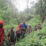 cameroon.camgew. reforestation in Kijum Ilim forest, Oku