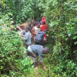 cameroon.camgew. Environmental education. Children collecting tree seeds, Oku
