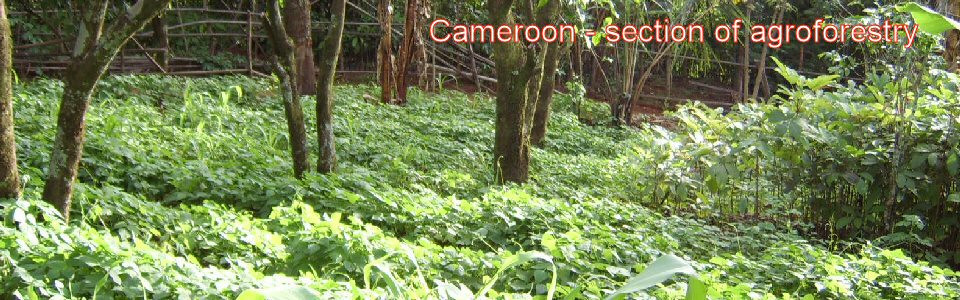 camwp-agroforestry