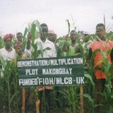 fioh.fund.sierra.leone.post.war.reconstruction. Seed multiplication programme 2000