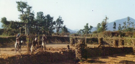 india.new.hope.rural.leprosy.trust. Tree nursery