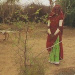 fioh.fund.pakistan.pvdp. Poverty alleviation in the Thar Desert. Beneficiary with bair tree
