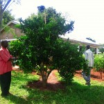fioh.kenya. FIOH Kenya tree nursery at Buburi Health Clinic, Busia