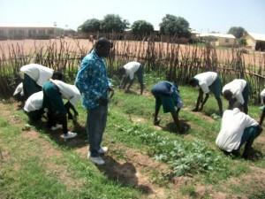fioh. ghana.permaculture.ghana. High school garden
