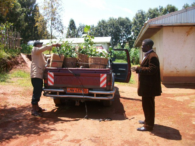 Delivering seedlings