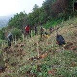 Planting seedlings