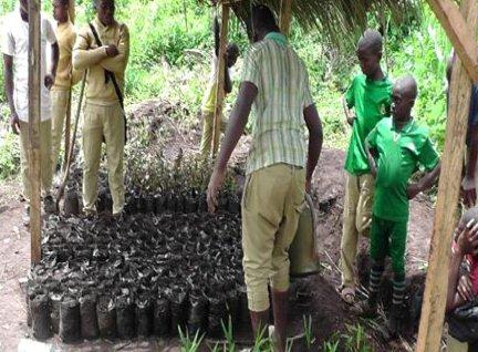 fiohcamnet-schoolgreenproject-seedlings2