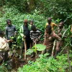 Planting seedlings in the forest