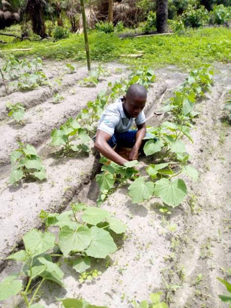 vegetale farm inspection SL